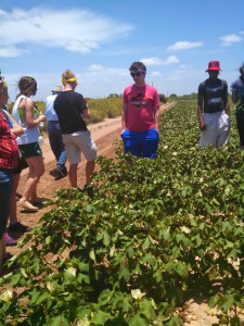 Texas Immersion Group learning about growing cotton.